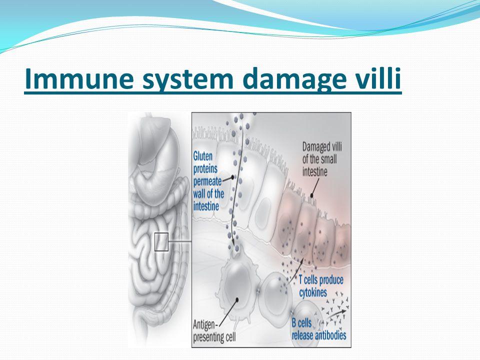 Immune system damage villi