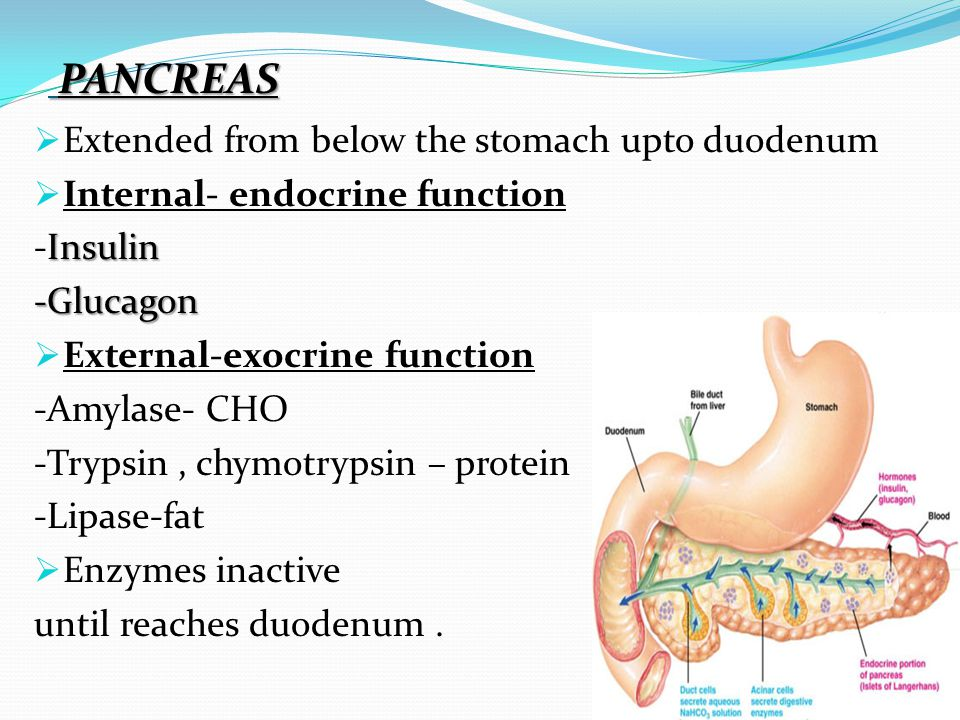 PANCREAS Extended from below the stomach upto duodenum