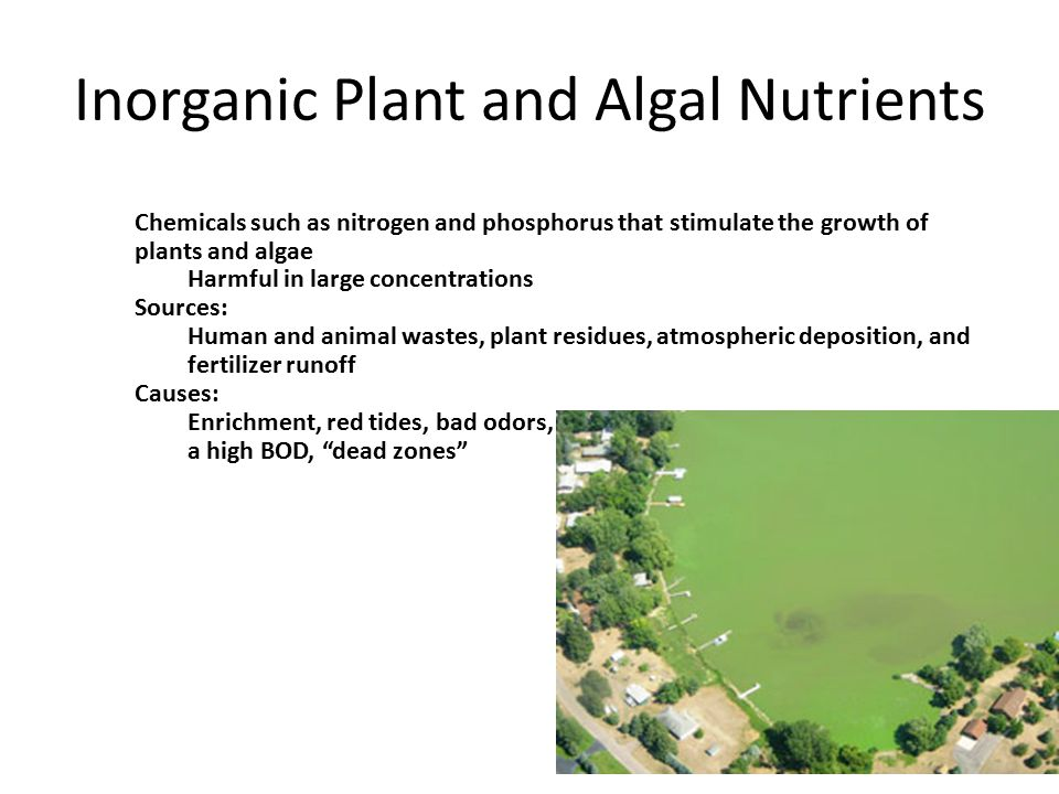 Inorganic Plant and Algal Nutrients