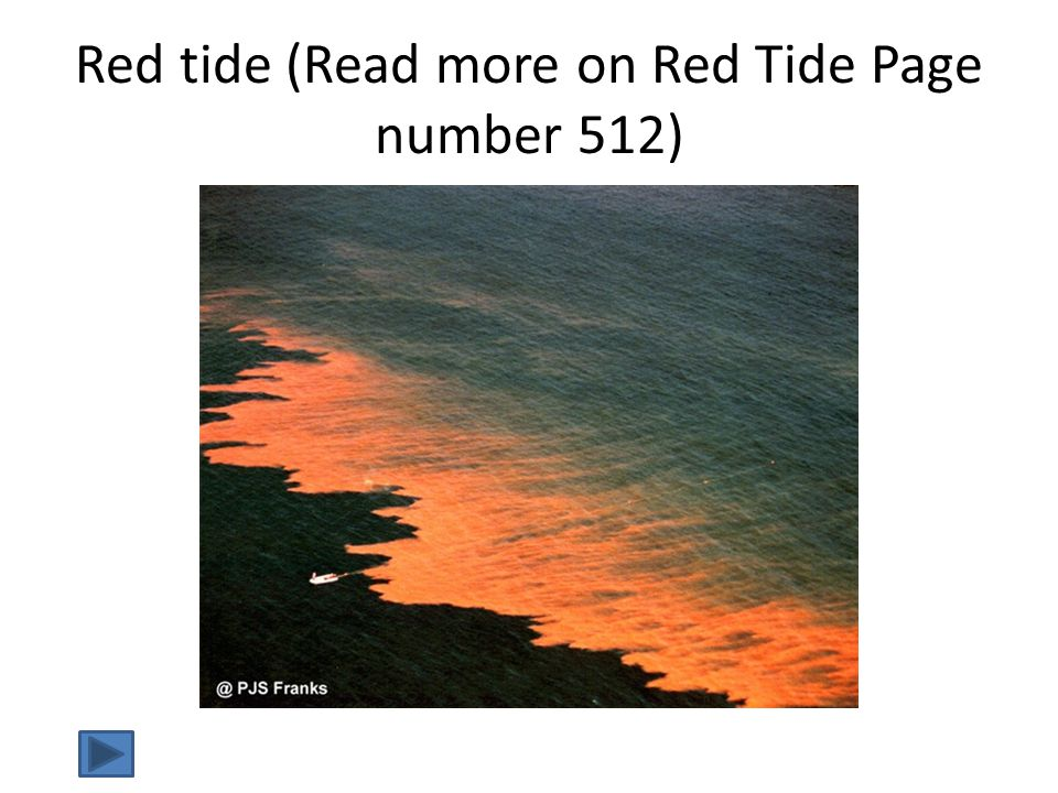 Red tide (Read more on Red Tide Page number 512)