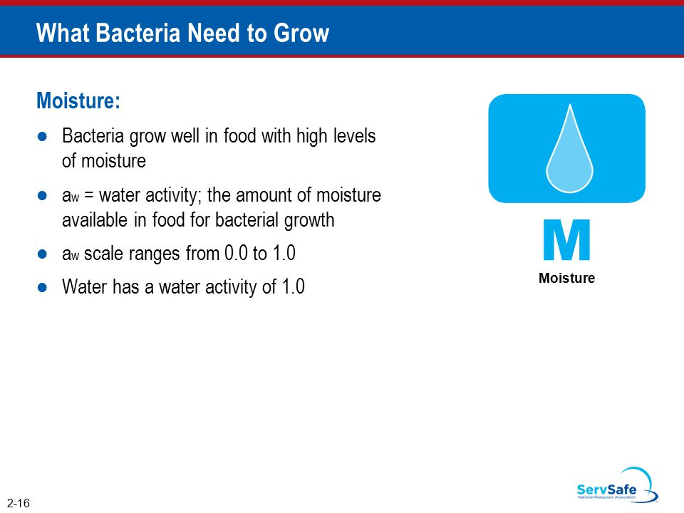 What Bacteria Need to Grow