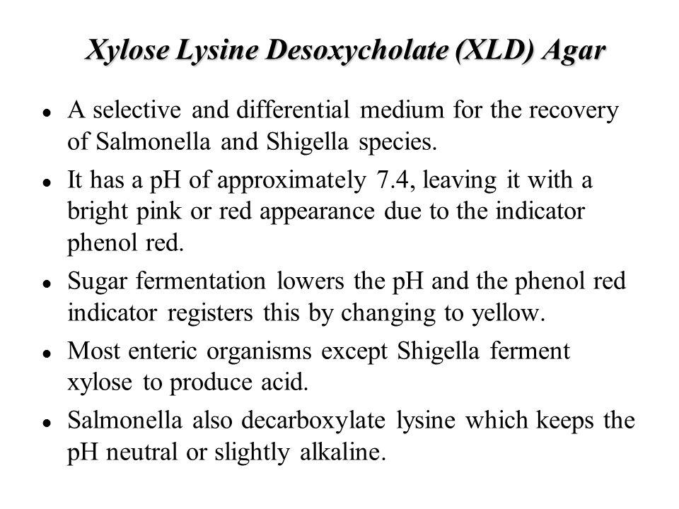 Xylose Lysine Desoxycholate (XLD) Agar