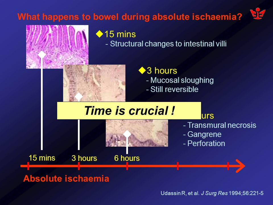 What happens to bowel during absolute ischaemia