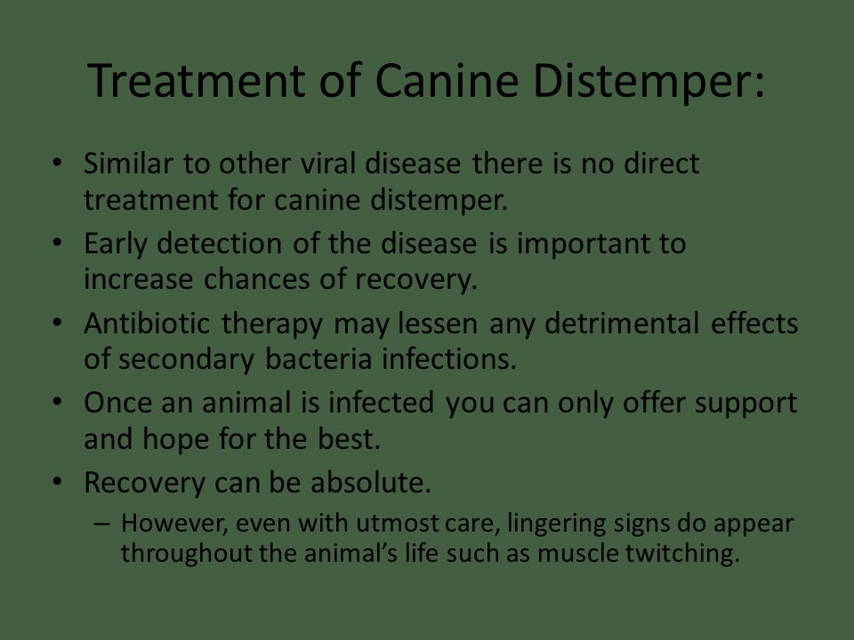 Treatment of Canine Distemper:
