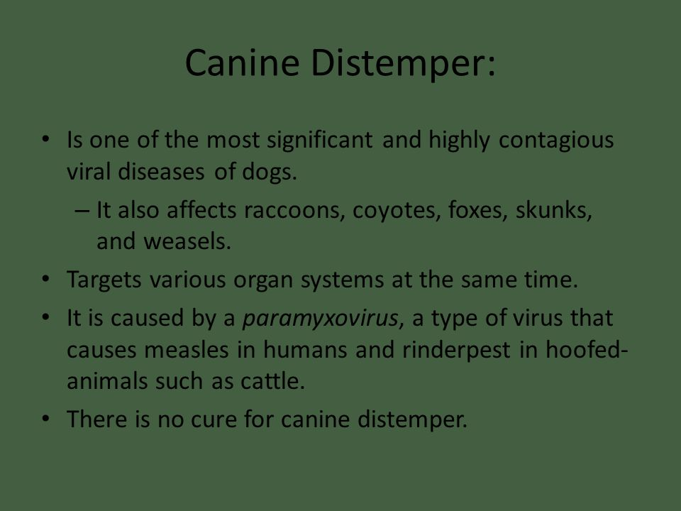 Canine Distemper: Is one of the most significant and highly contagious viral diseases of dogs.