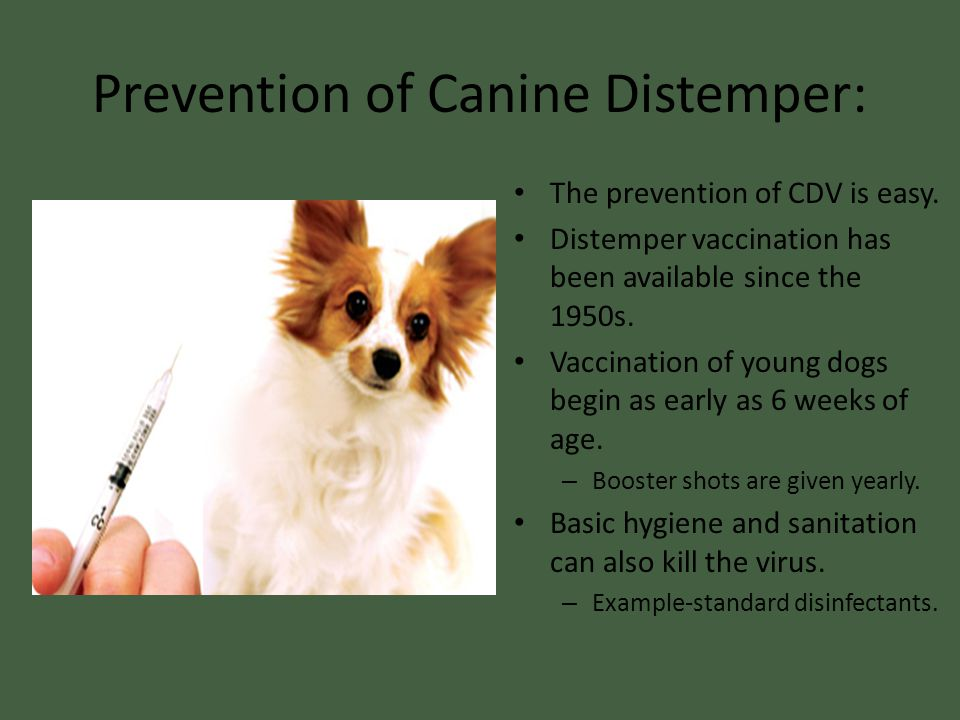 Prevention of Canine Distemper: