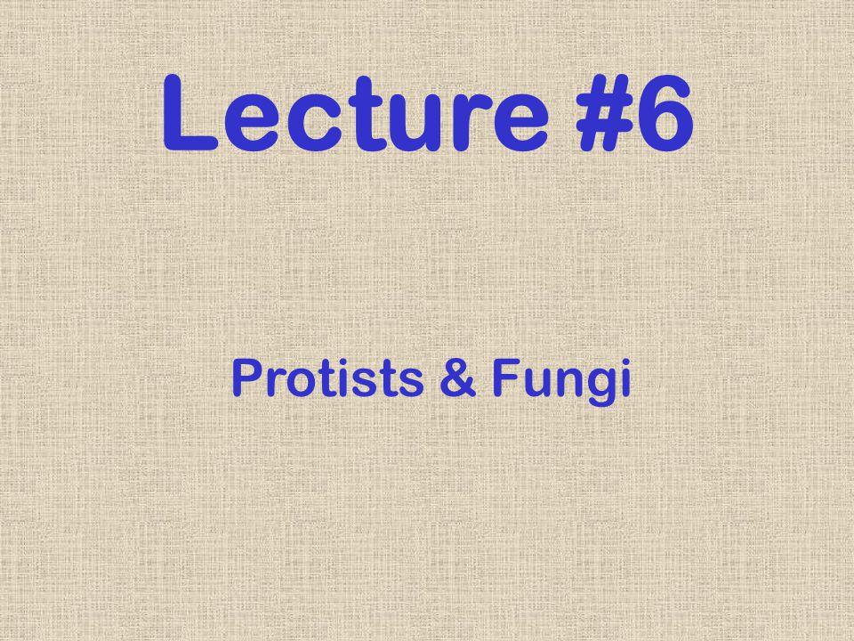 Lecture #6 Protists & Fungi