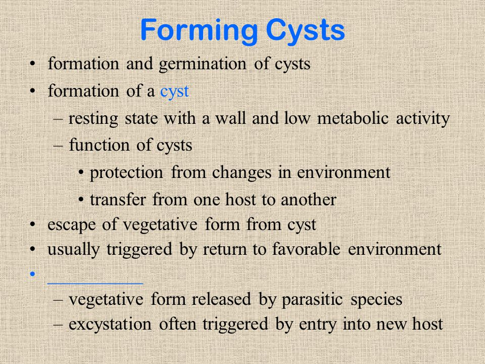 Forming Cysts formation and germination of cysts formation of a cyst