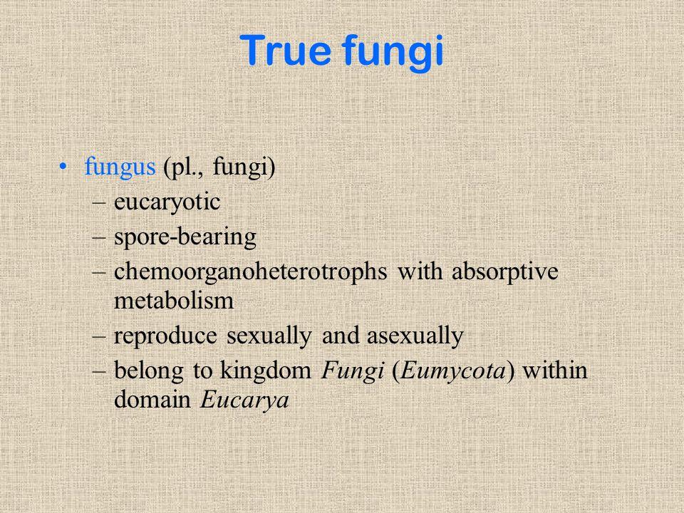 True fungi fungus (pl., fungi) eucaryotic spore-bearing