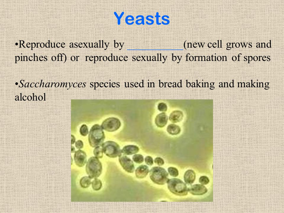 Yeasts Reproduce asexually by __________(new cell grows and pinches off) or reproduce sexually by formation of spores.