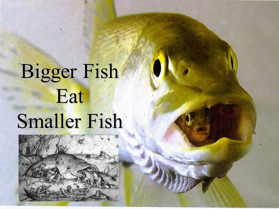 Bigger Fish Eat Smaller Fish