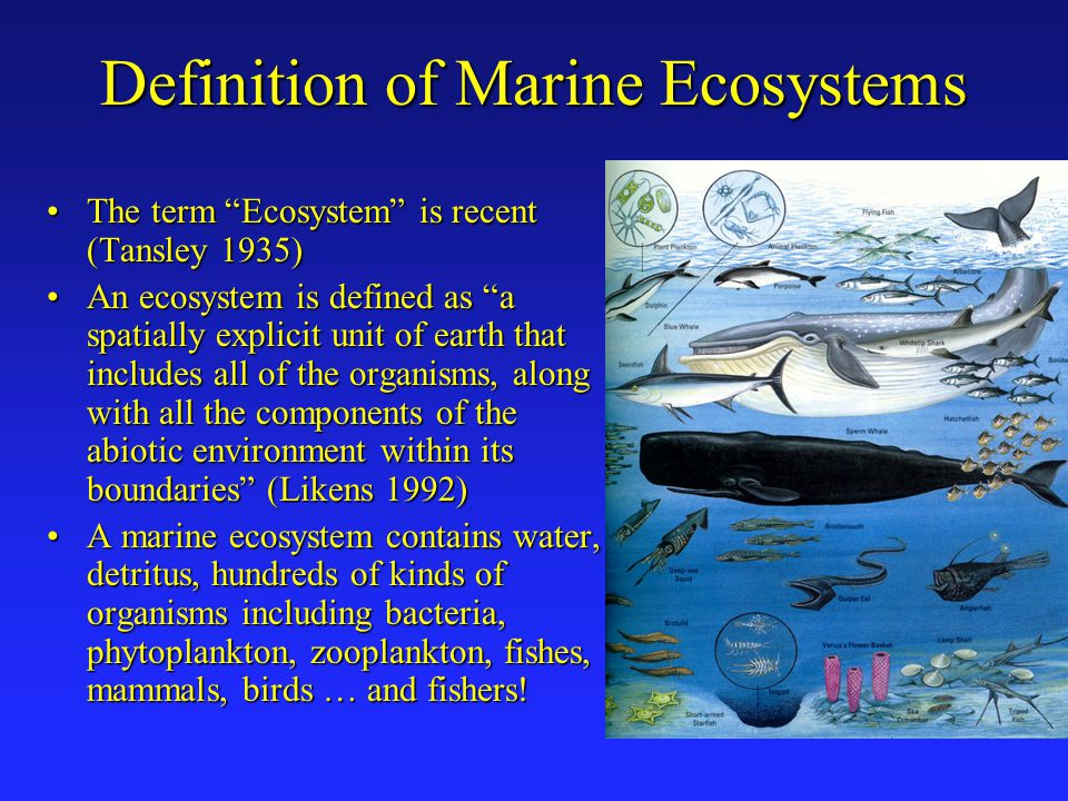 Definition of Marine Ecosystems