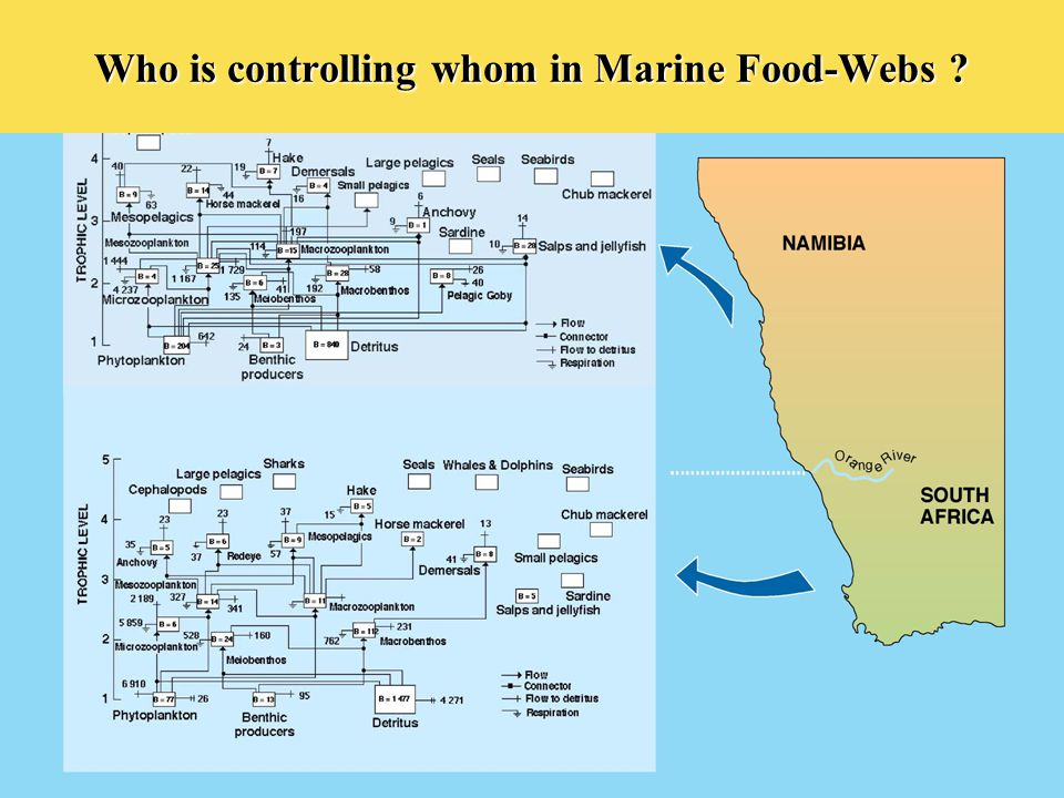 Who is controlling whom in Marine Food-Webs