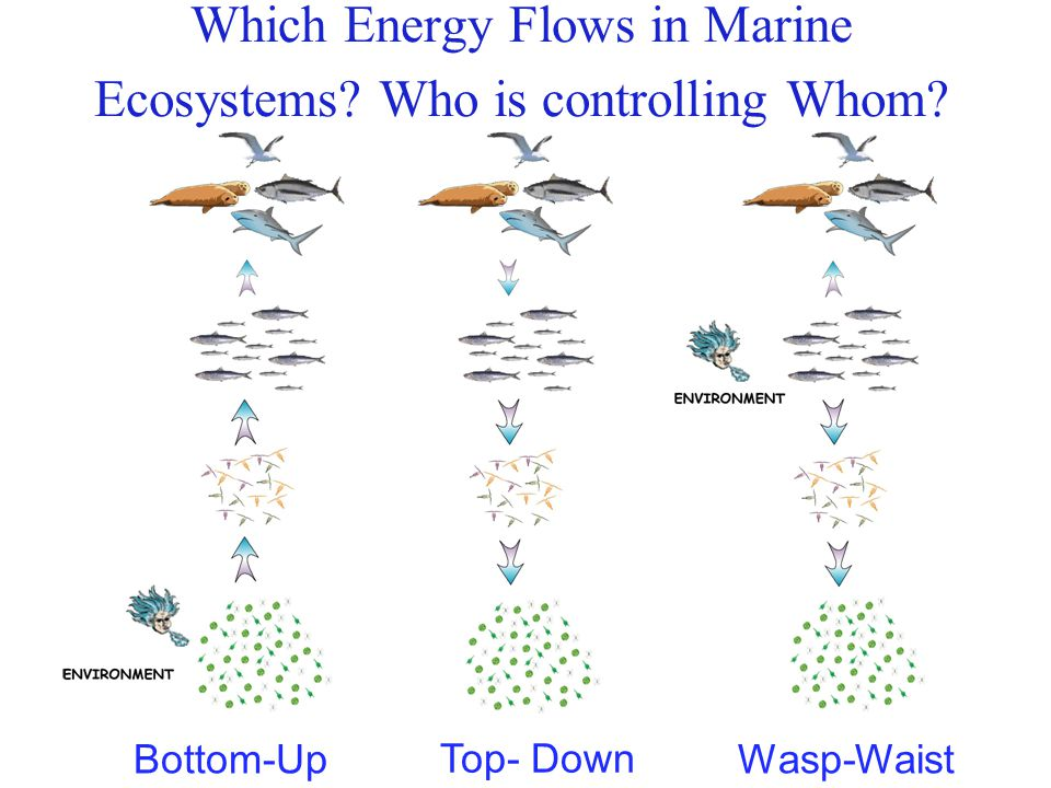 Which Energy Flows in Marine Ecosystems Who is controlling Whom