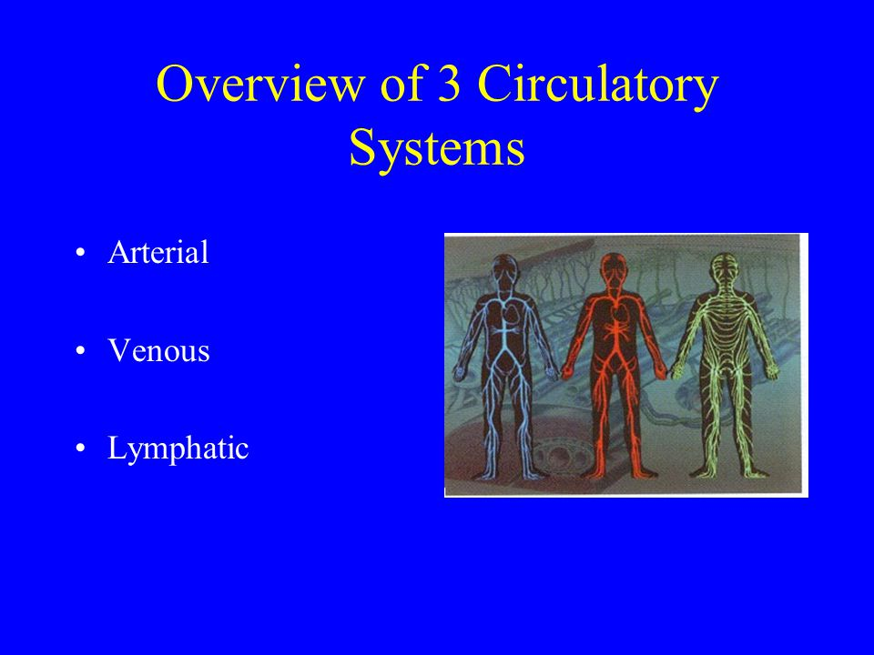 Overview of 3 Circulatory Systems