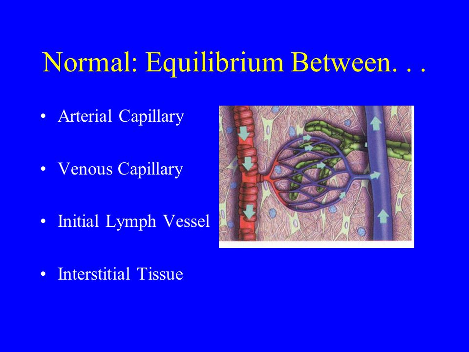 Normal: Equilibrium Between. . .