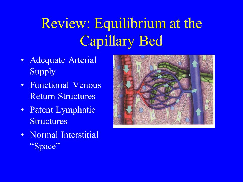 Review: Equilibrium at the Capillary Bed