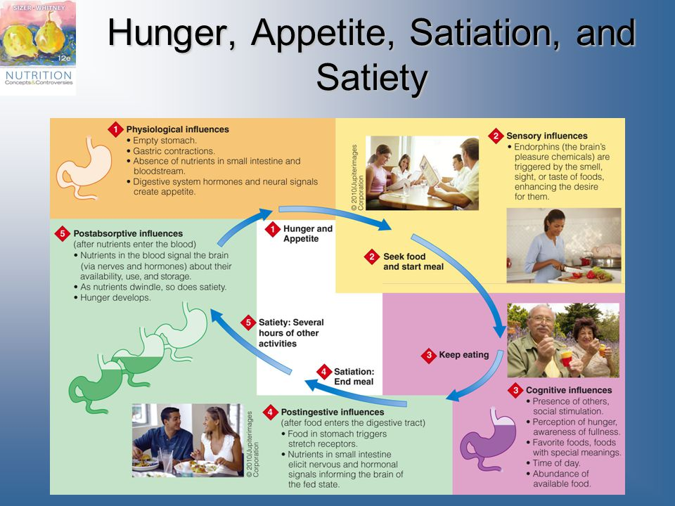 Hunger, Appetite, Satiation, and Satiety