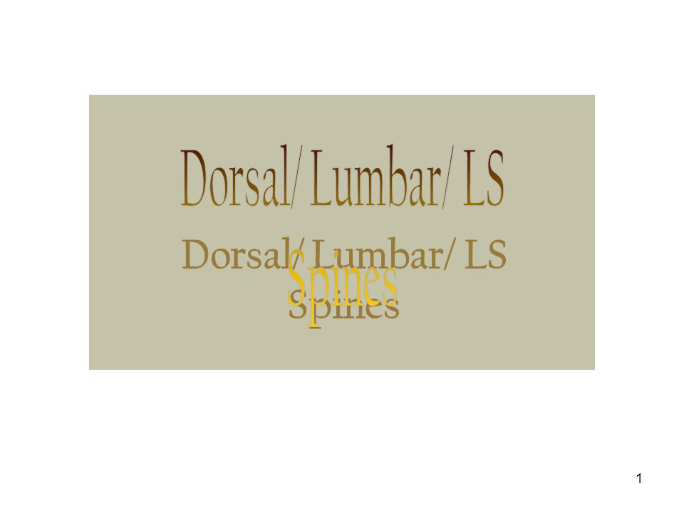 Dorsal/ Lumbar/ LS Spines