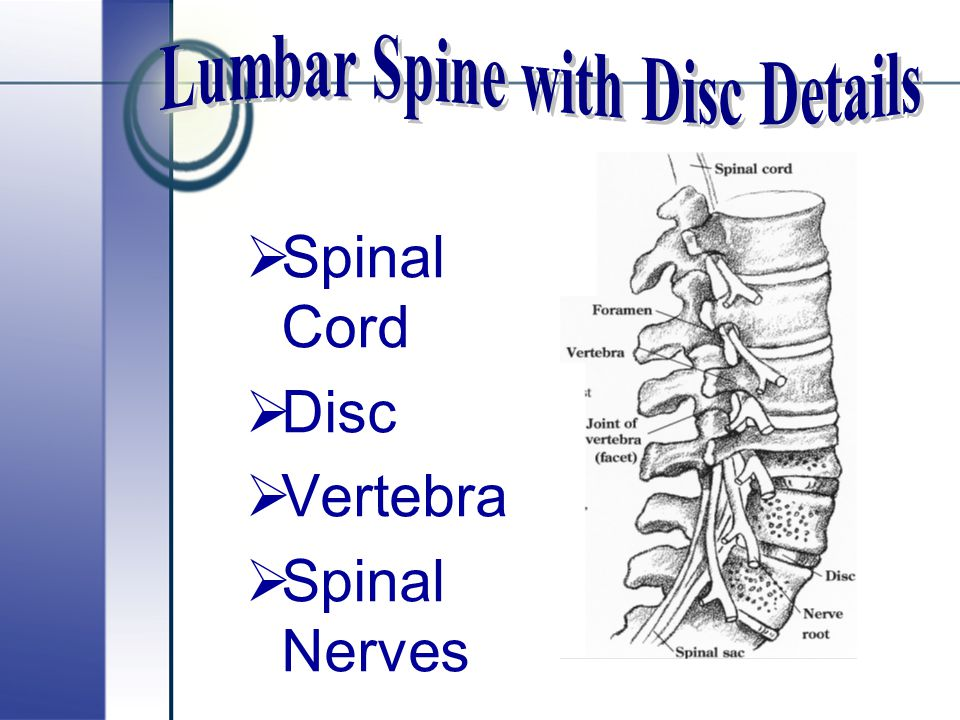 Lumbar Spine with Disc Details