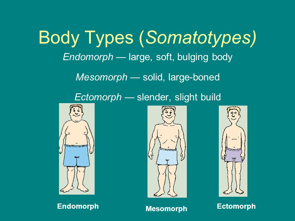 Body Types (Somatotypes)