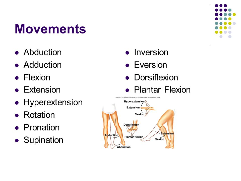 Movements Abduction Adduction Flexion Extension Hyperextension