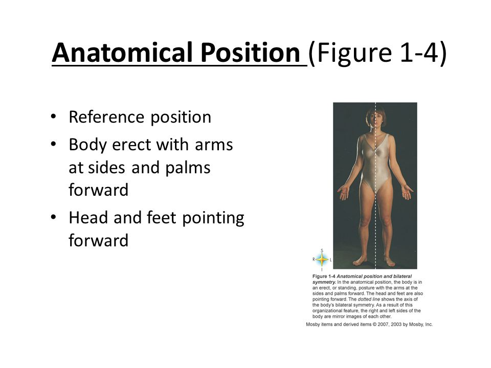 Anatomical Position (Figure 1-4)