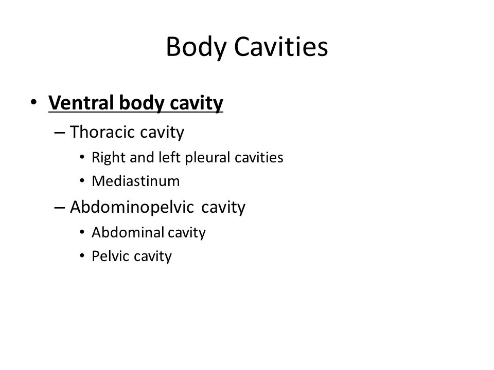 Body Cavities Ventral body cavity Thoracic cavity