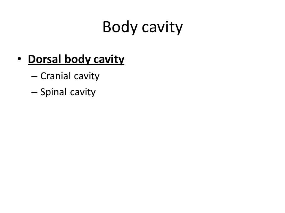 Body cavity Dorsal body cavity Cranial cavity Spinal cavity