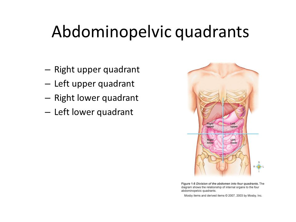 Anatomy and physiology ppt video online download abdominopelvic quadrants ccuart Image collections