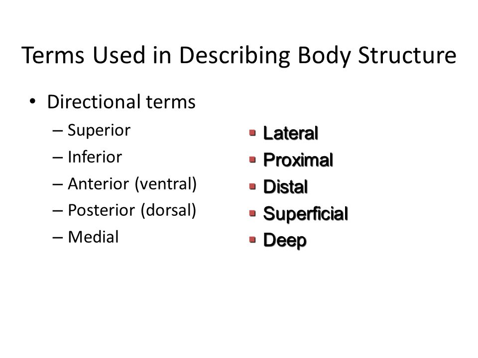 Terms Used in Describing Body Structure