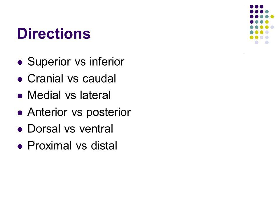 Directions Superior vs inferior Cranial vs caudal Medial vs lateral
