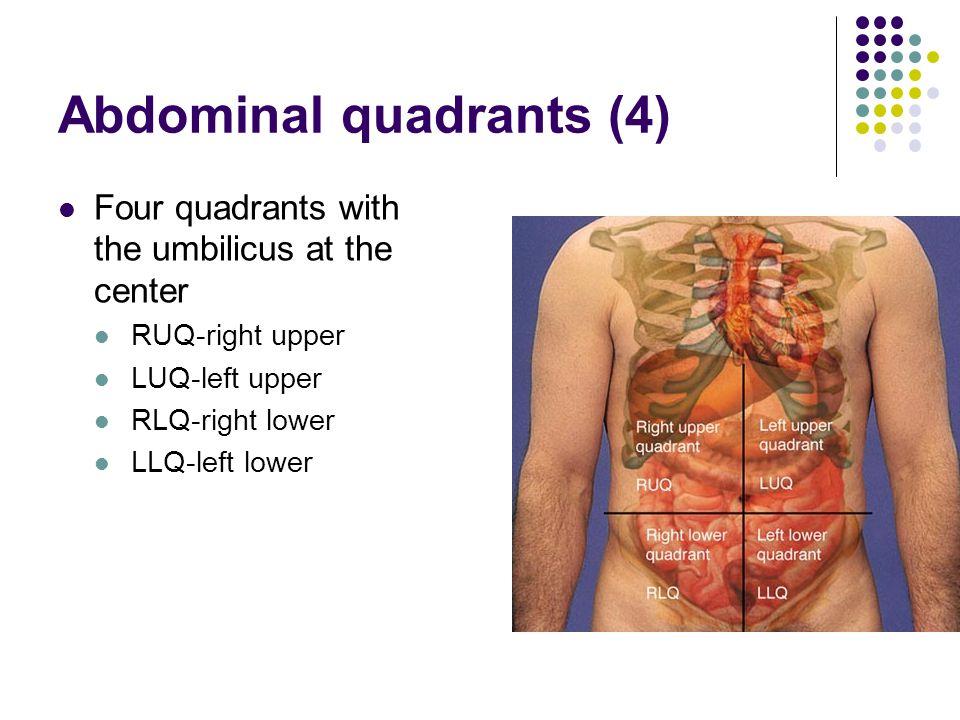 Abdominal quadrants (4)