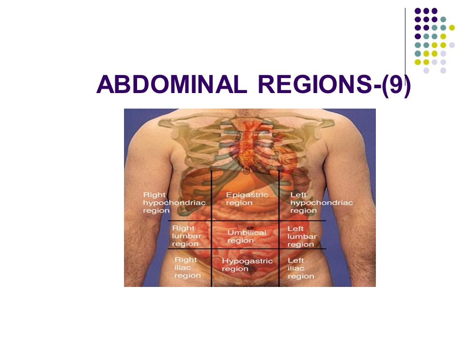 ABDOMINAL REGIONS-(9)