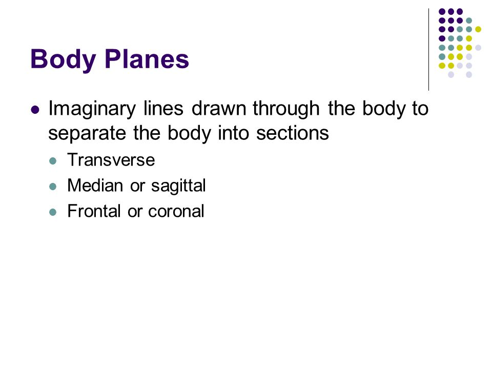 Body Planes Imaginary lines drawn through the body to separate the body into sections. Transverse.