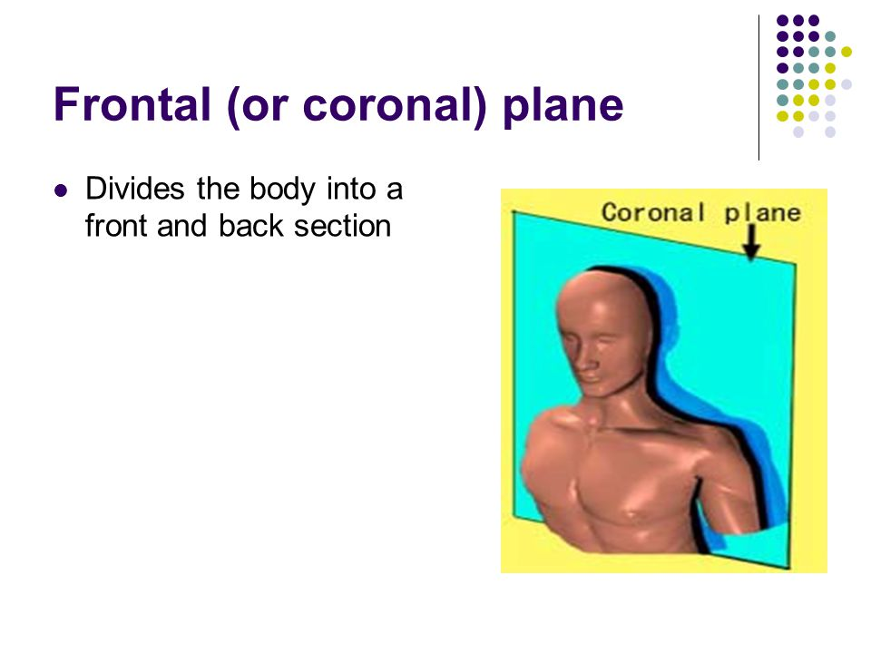 Frontal (or coronal) plane