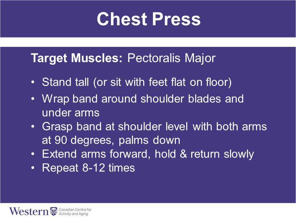 Chest Press Target Muscles: Pectoralis Major