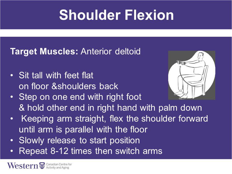 Shoulder Flexion Target Muscles: Anterior deltoid