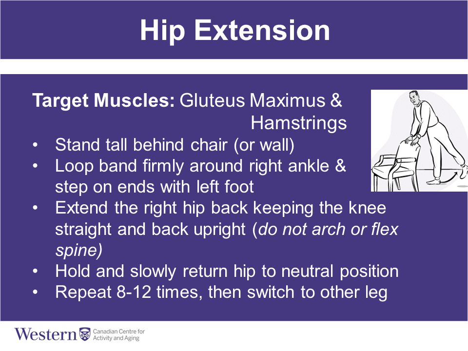 Hip Extension Target Muscles: Gluteus Maximus & Hamstrings