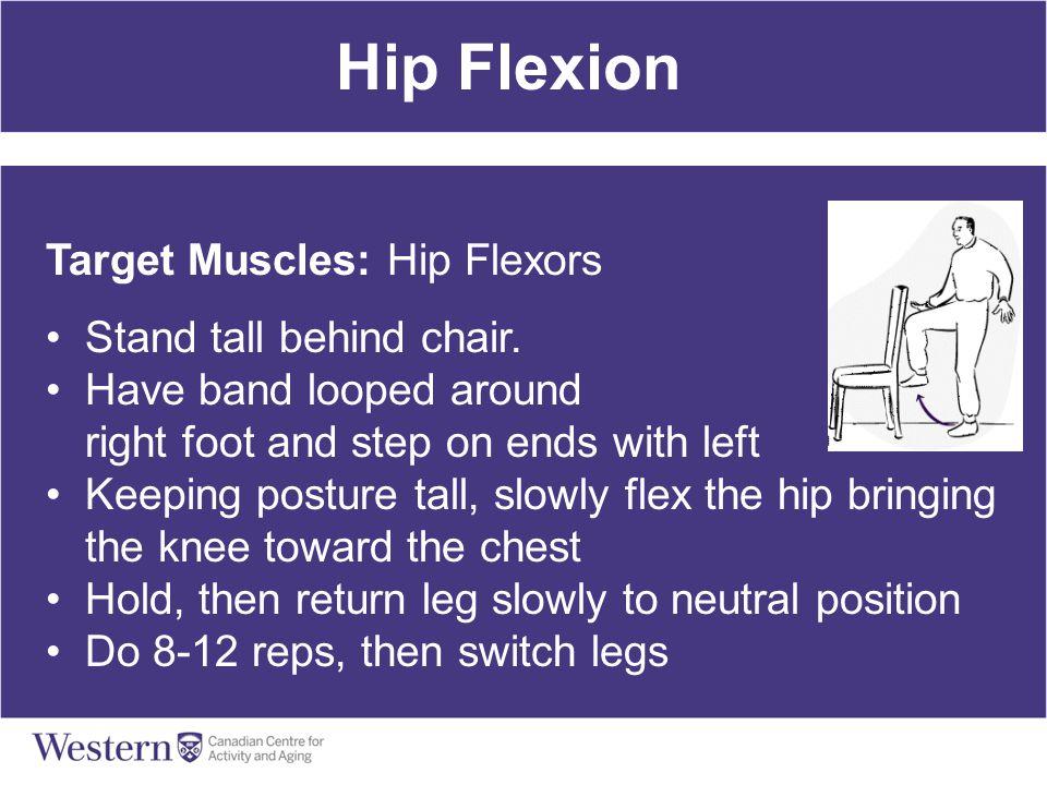 Hip Flexion Target Muscles: Hip Flexors Stand tall behind chair.