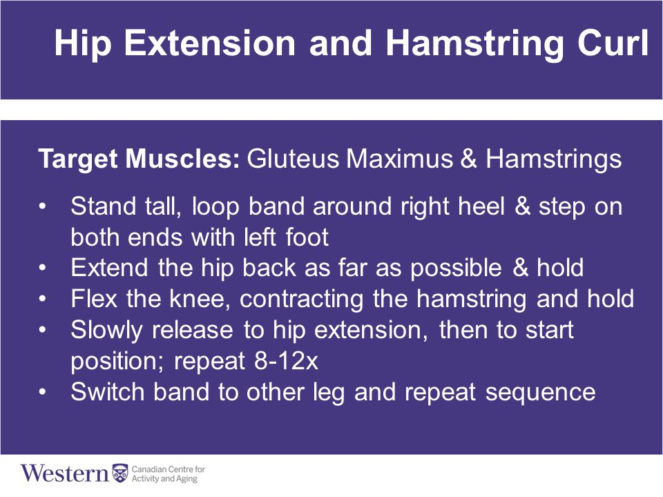 Hip Extension and Hamstring Curl