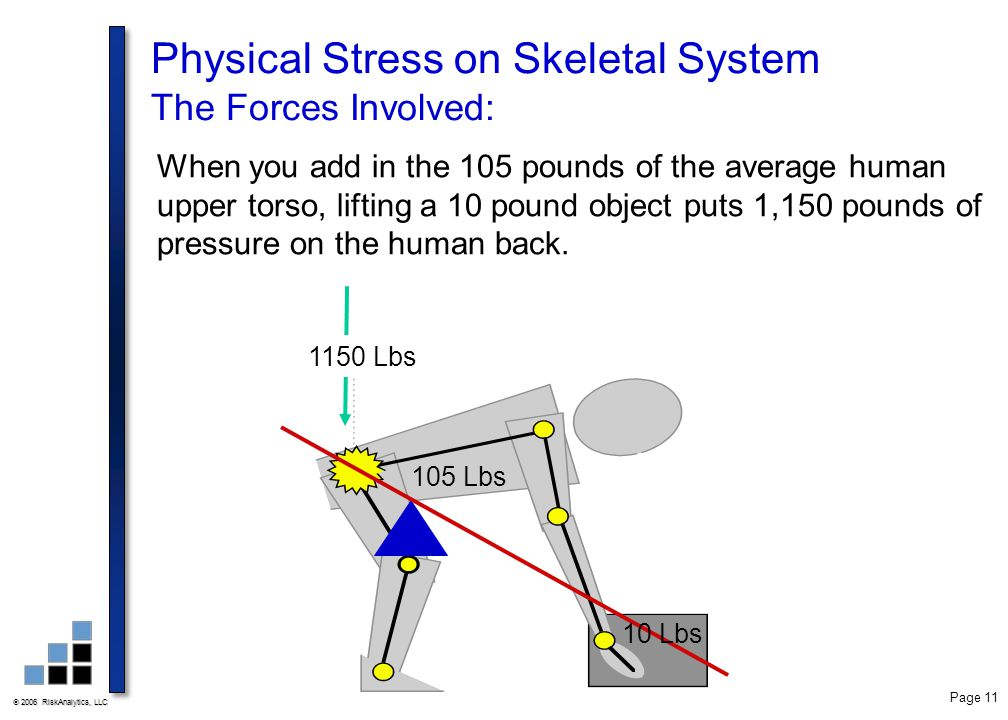 Physical Stress on Skeletal System The Forces Involved: