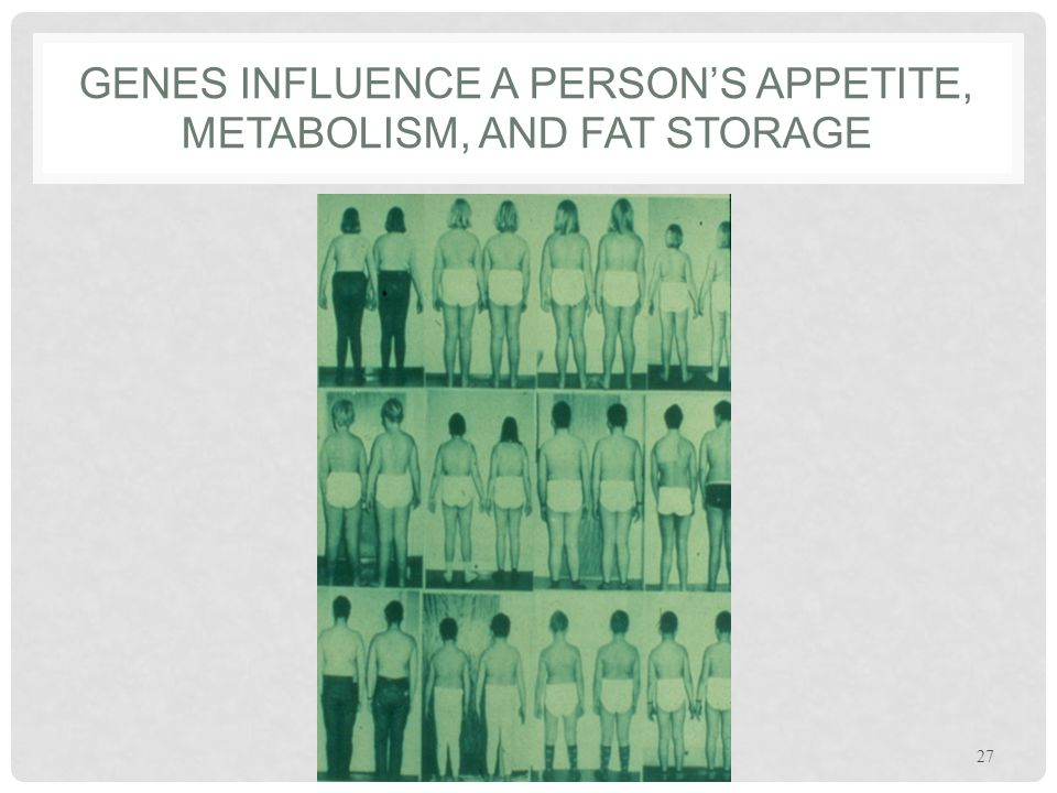 Genes influence a person's appetite, metabolism, and fat storage