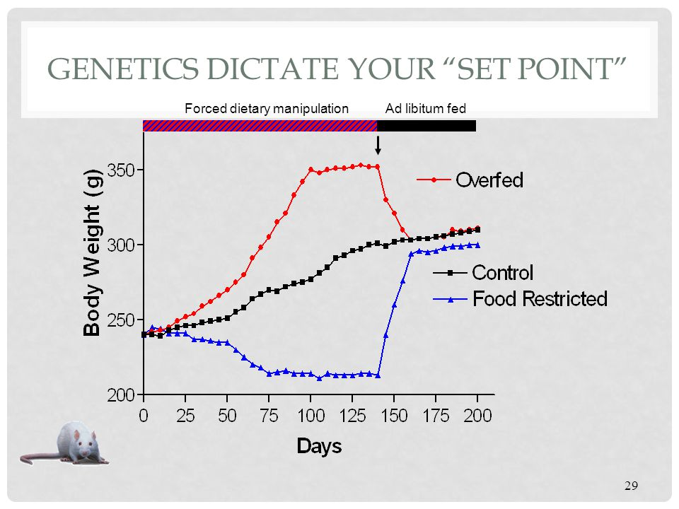 Genetics dictate your set point