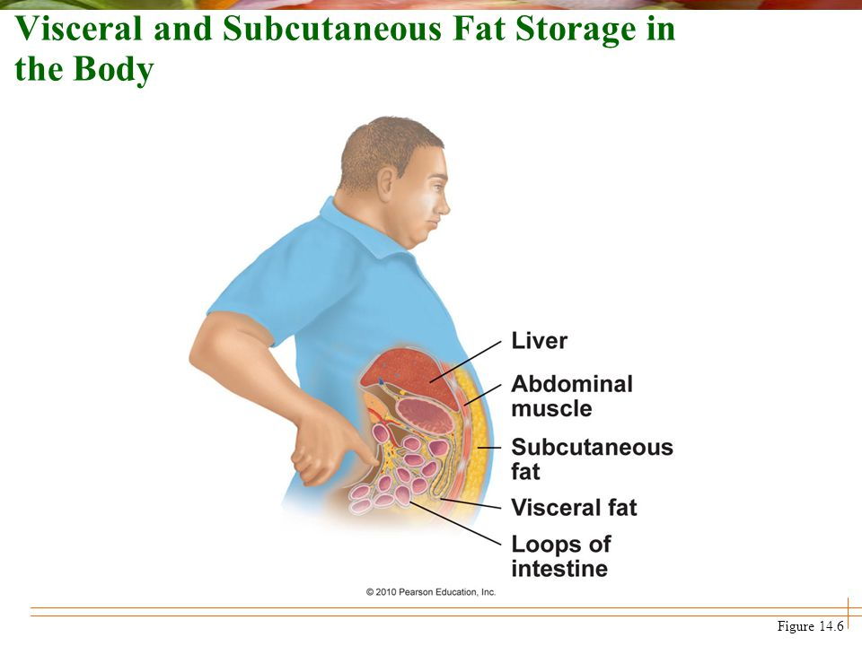 Visceral and Subcutaneous Fat Storage in the Body