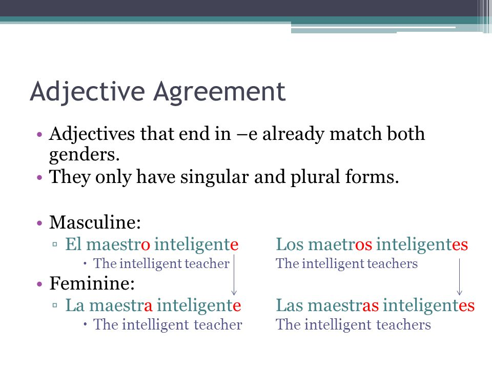 Adjective Agreement Adjectives that end in –e already match both genders. They only have singular and plural forms.