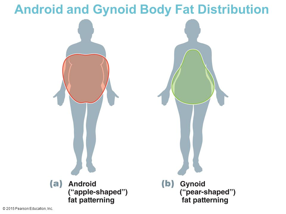 Android and Gynoid Body Fat Distribution