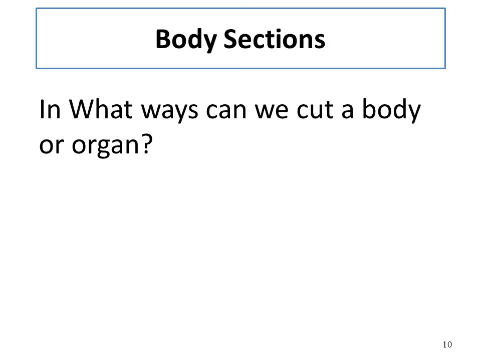 Body Sections In What ways can we cut a body or organ