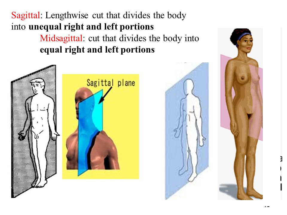 Sagittal: Lengthwise cut that divides the body into unequal right and left portions