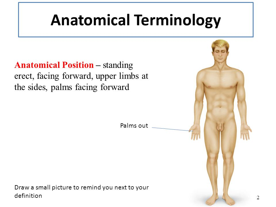 Human anatomy definitions
